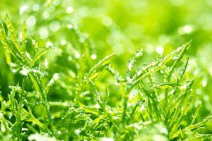 水滴がついた草